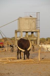 niger juli 2009 242
